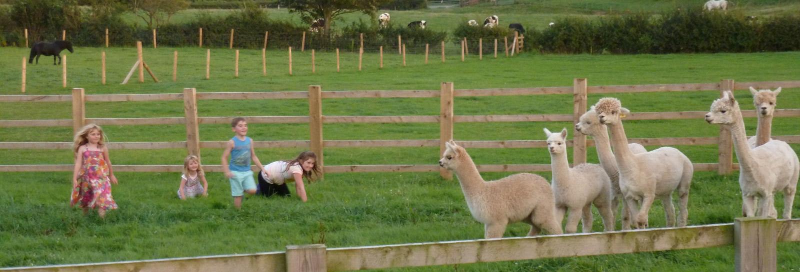 Hebbs Alpaca header